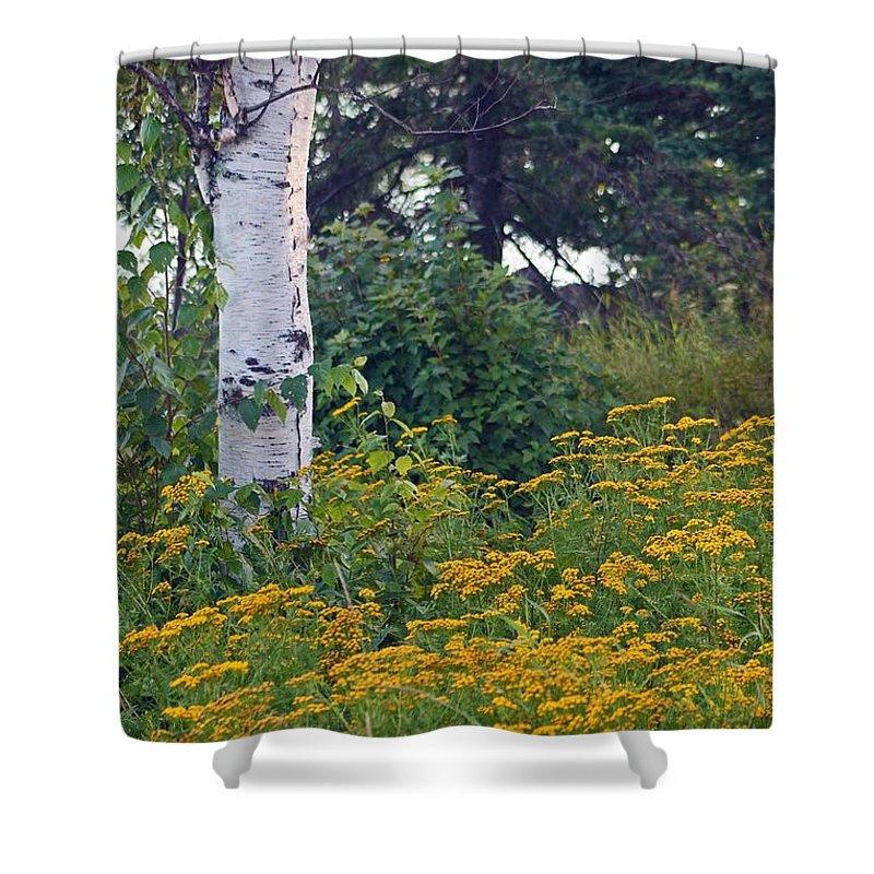 Minnesota Shower Curtain featuring the photograph Birch Tree by Stephanie Hanson