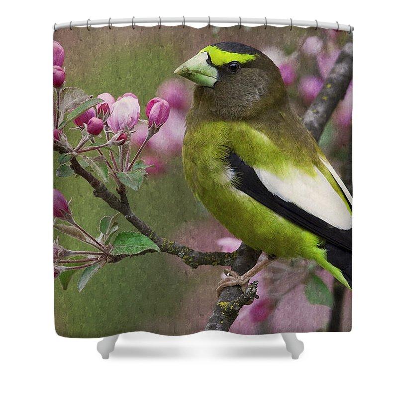 Bird Shower Curtain featuring the photograph Bird 5 by Ingrid Smith-Johnsen