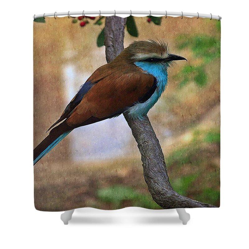 Bird Shower Curtain featuring the photograph Bird 6 by Ingrid Smith-Johnsen