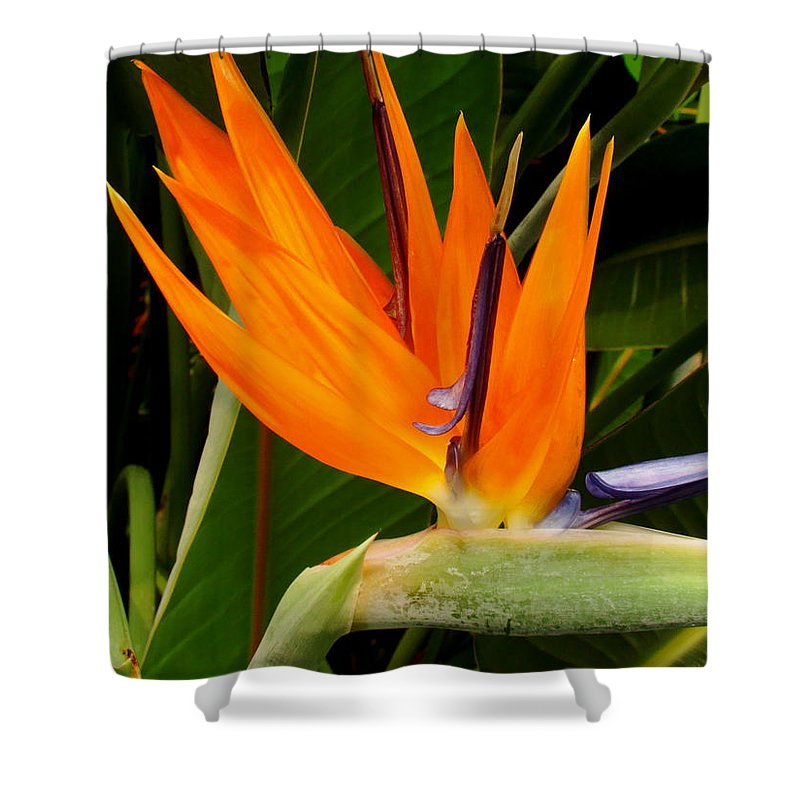 Fine Art Shower Curtain Featuring The Photograph Bird Of Paradise By Rodney Lee Williams