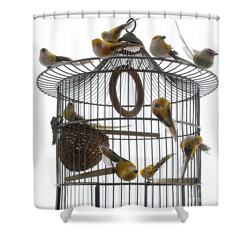 Freedom Shower Curtain Featuring The Photograph Birds Inside And Outside A Cage By Bernard Jaubert