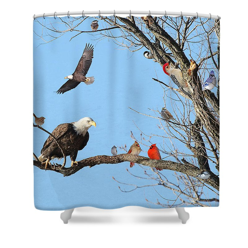 Nature Shower Curtain featuring the photograph Birds Of A Feather by Mike Dickie