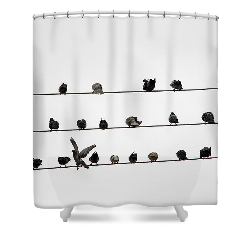 Amazon Rainforest Shower Curtain featuring the photograph Birds Pattern by Ricardo Lima