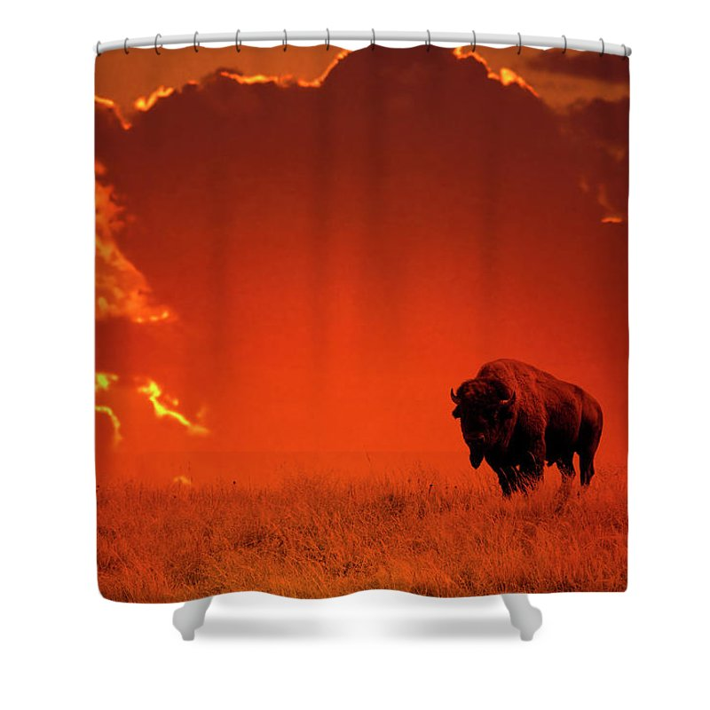 Scenics Shower Curtain featuring the photograph Bison At Sunset by Mark Newman