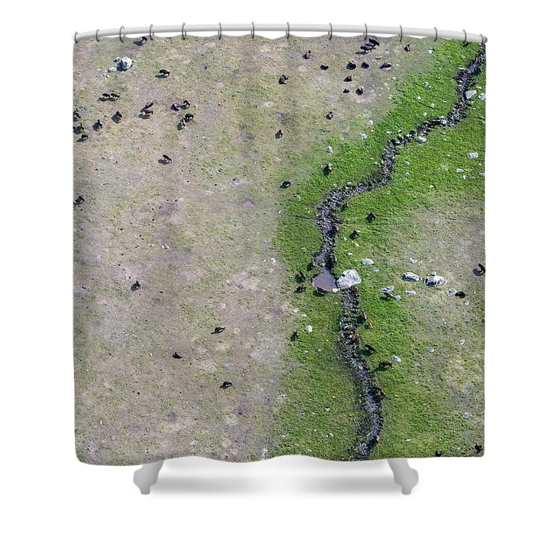 North America Shower Curtain featuring the photograph Bison In The Lamar by Max Waugh