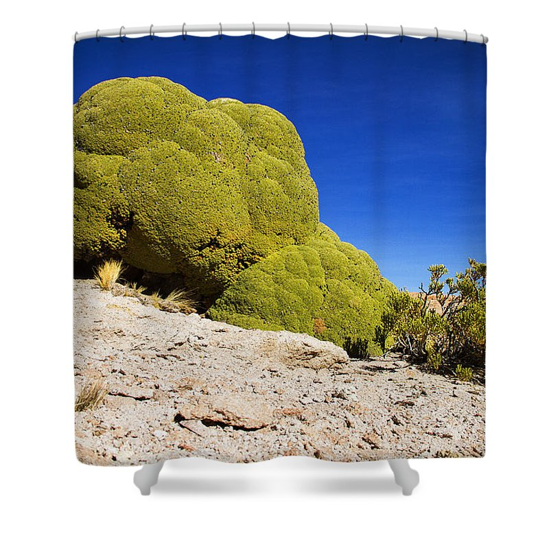 Desert Shower Curtain featuring the photograph Bizarre Green Plant Bolivia by For Ninety One Days