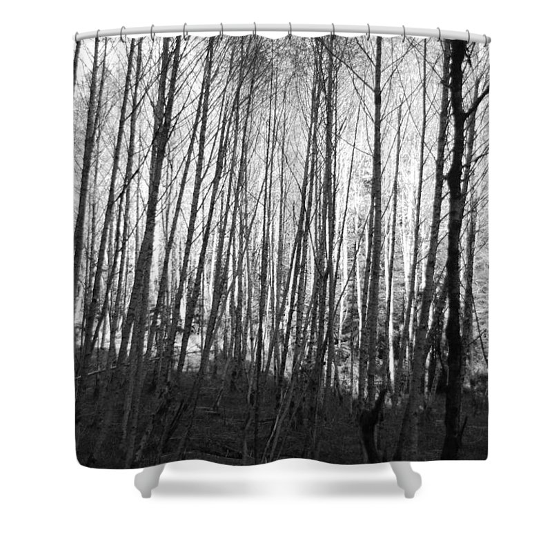Birch Shower Curtain featuring the photograph Black And White Birch Stand by Michael Merry