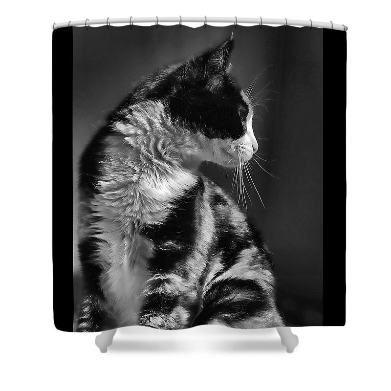 Cat Shower Curtain featuring the photograph Black And White Cat In Profile by Jennie Marie Schell