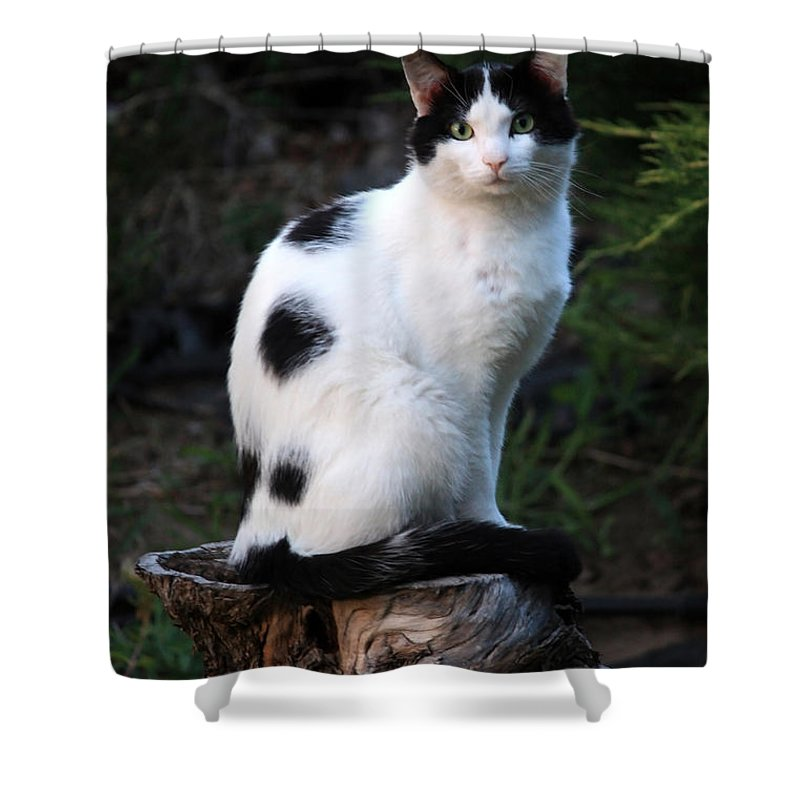 Cat Shower Curtain featuring the photograph Black And White Cat On Tree Stump by Carol Groenen