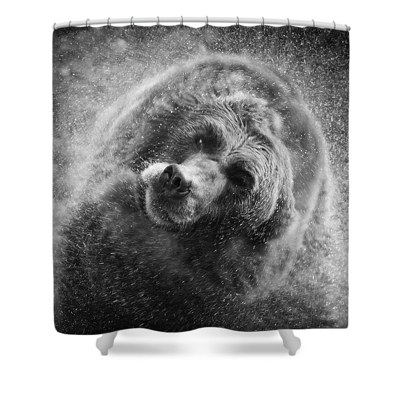 Animals Shower Curtain featuring the photograph Black And White Grizzly by Steve McKinzie
