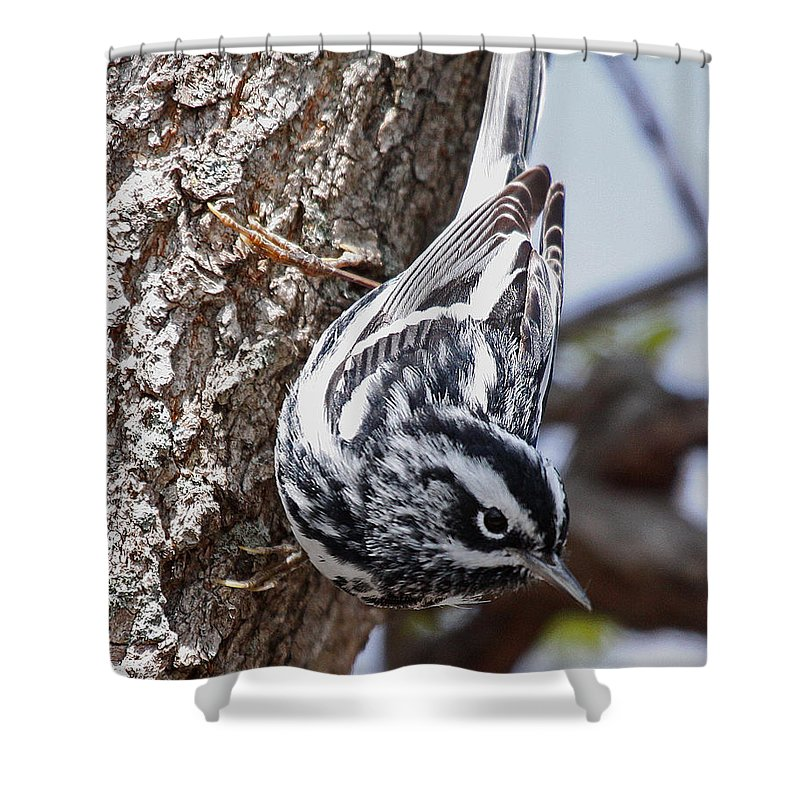 Nature Shower Curtain featuring the photograph Black And White by Mike Dickie