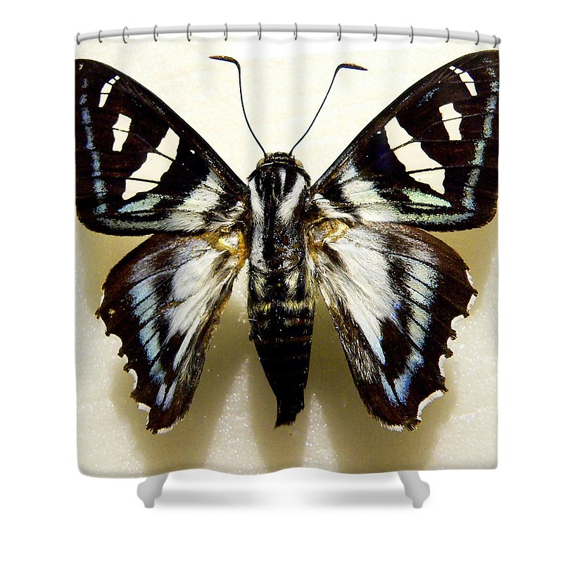 Butterfly Shower Curtain featuring the photograph Black And White Moth by Rosalie Scanlon