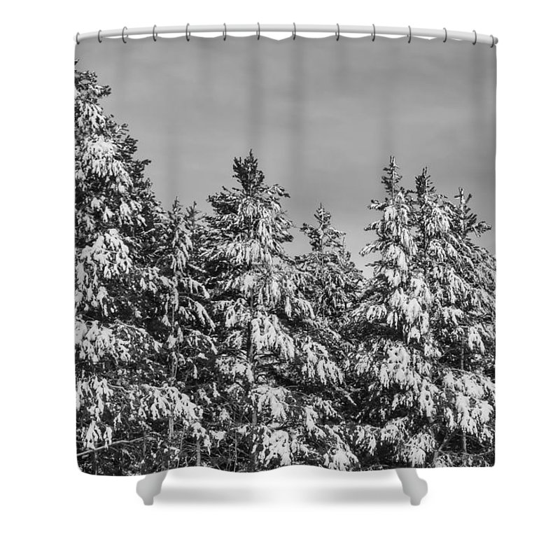Snow Shower Curtain featuring the photograph Black And White Snow Covered Trees by Brandon Bourdages