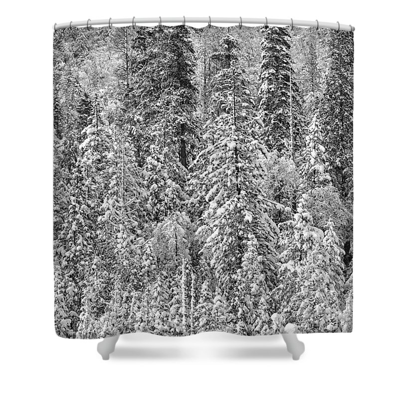 Snow Shower Curtain featuring the photograph Black And White Trees In A Forest by Brandon Bourdages