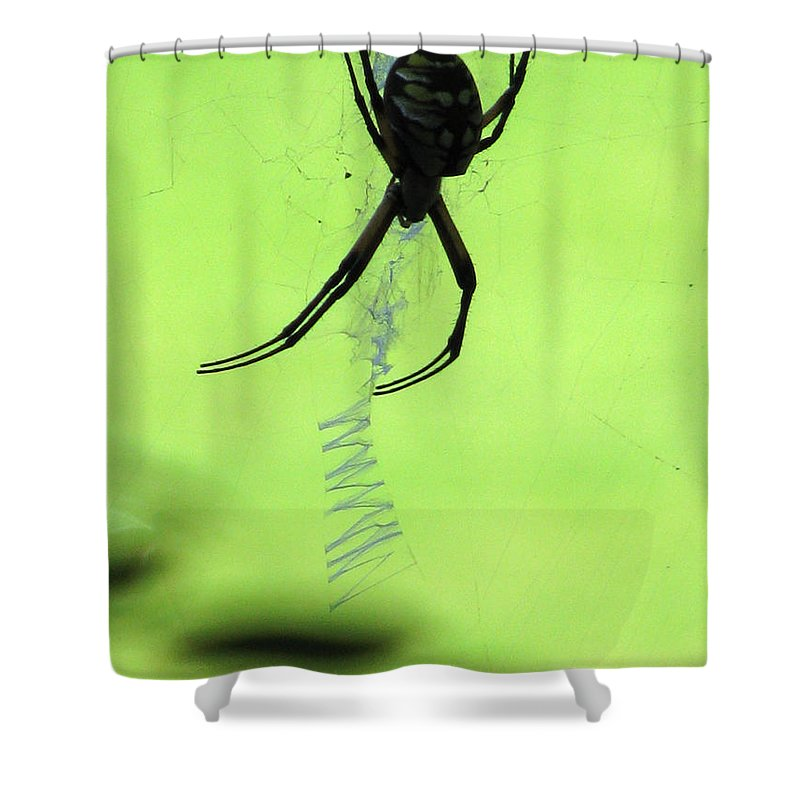 Spider Shower Curtain featuring the photograph Black And Yellow Argiope - Spider Silhouette 02 by Pamela Critchlow