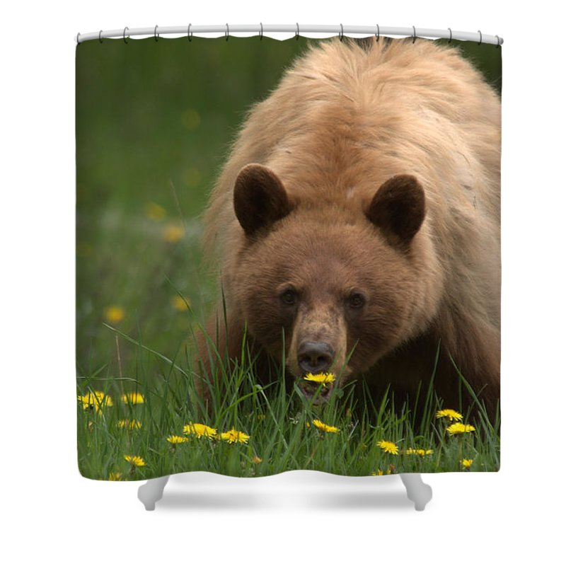 Bear Shower Curtain featuring the photograph Black Bear by Frank Madia