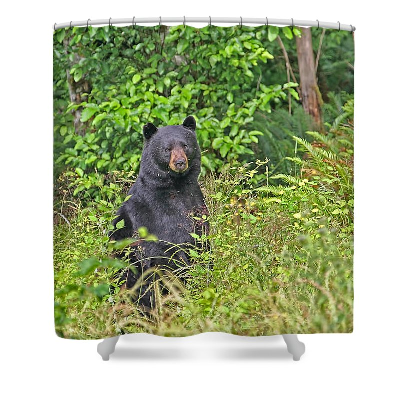 Bear Shower Curtain Featuring The Photograph Black Standing Up By Peggy Collins