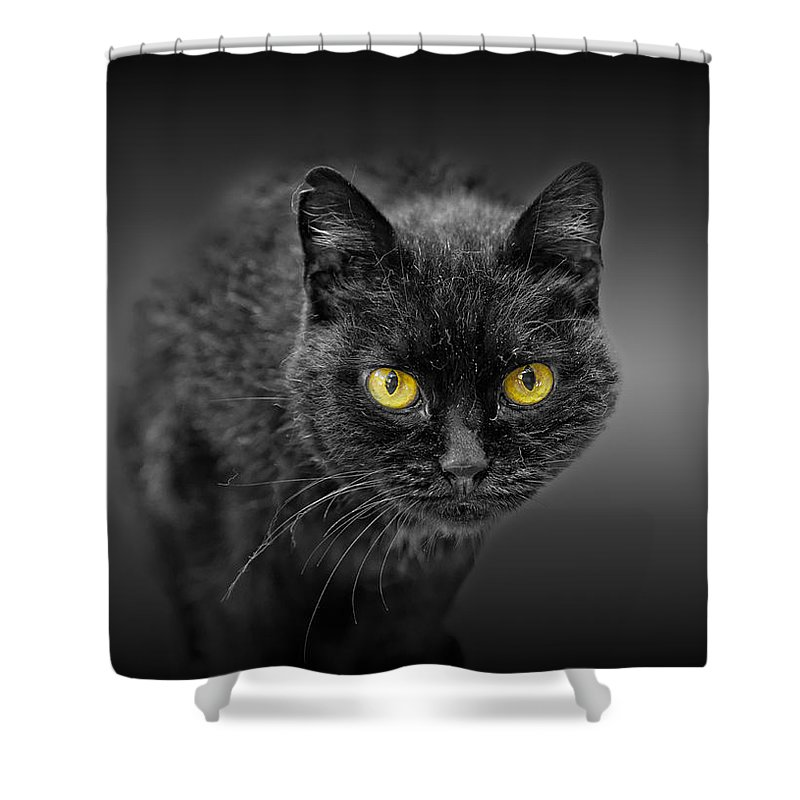 Animal Shower Curtain featuring the photograph Black Cat by Peter Lakomy