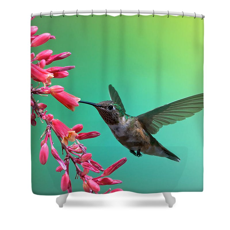 Archilochus Alexandri Shower Curtain featuring the photograph Black Chinned Hummingbird by Mary Lee Dereske