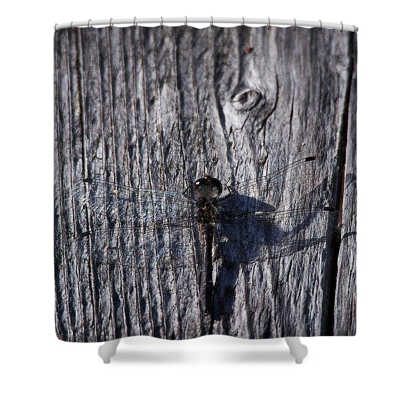 Lehto Shower Curtain featuring the photograph Black Darter by Jouko Lehto