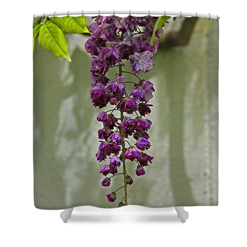 Cascading Vine Shower Curtain Featuring The Photograph Black Dragon Wisteria By Suzanne Stout
