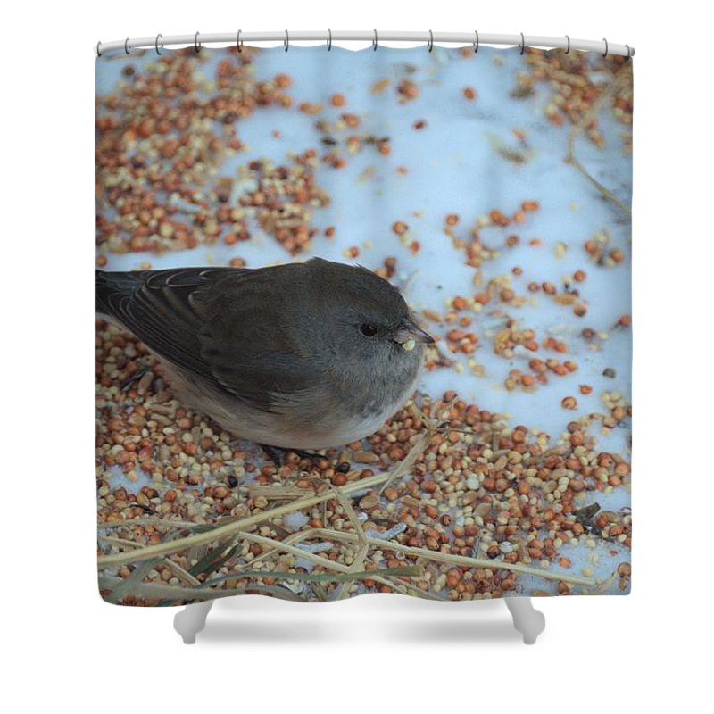 Bird Shower Curtain featuring the photograph Black Eyed Junco by Bonfire Photography