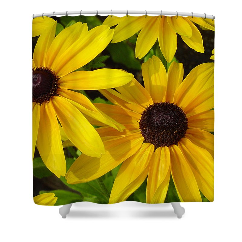Black Eyed Susan Shower Curtain featuring the photograph Black Eyed Susans by Suzanne Gaff
