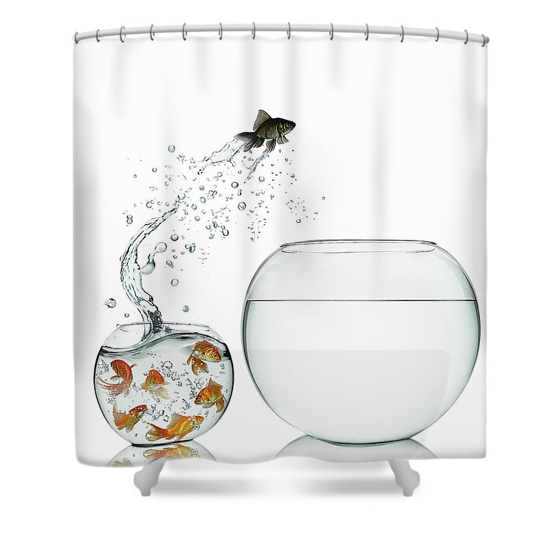 Pets Shower Curtain featuring the photograph Black Goldfish by Gandee Vasan
