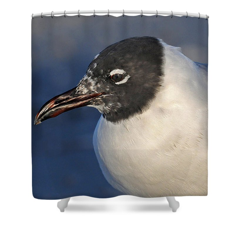 Black Headed Gull Shower Curtain featuring the photograph Black Headed Gull Portrait by Dave Mills