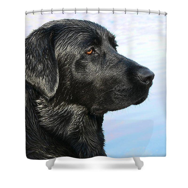 Labrador Retriever Shower Curtain featuring the photograph Black Labrador Retriever After The Swim by Jennie Marie Schell