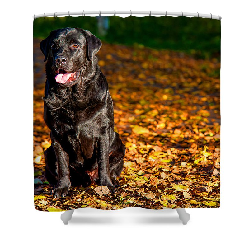Dog Shower Curtain Featuring The Photograph Black Labrador Retriever In  Autumn Forest By Jenny Rainbow