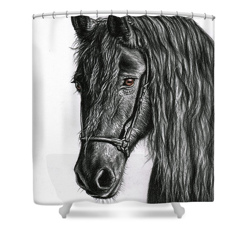 Horse Shower Curtain featuring the drawing Black Pearl by Nicole Zeug