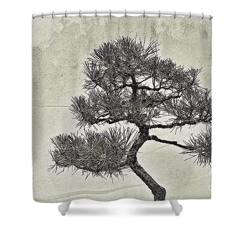 Bonsai Shower Curtain featuring the photograph Black Pine Bonsai In Monochrome by Gary Richards