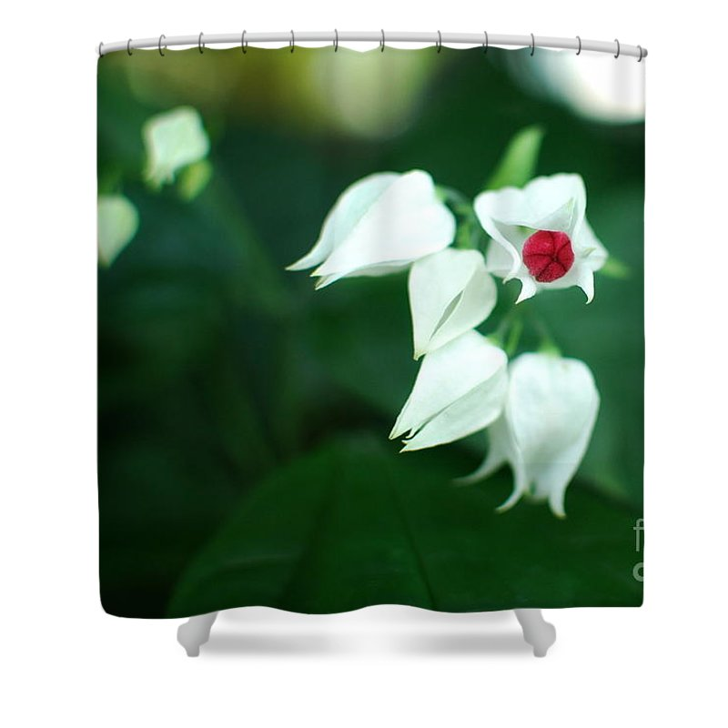 Clerodendrum Shower Curtain featuring the photograph Bleeding Heart Vine Blossom by Floyd Menezes