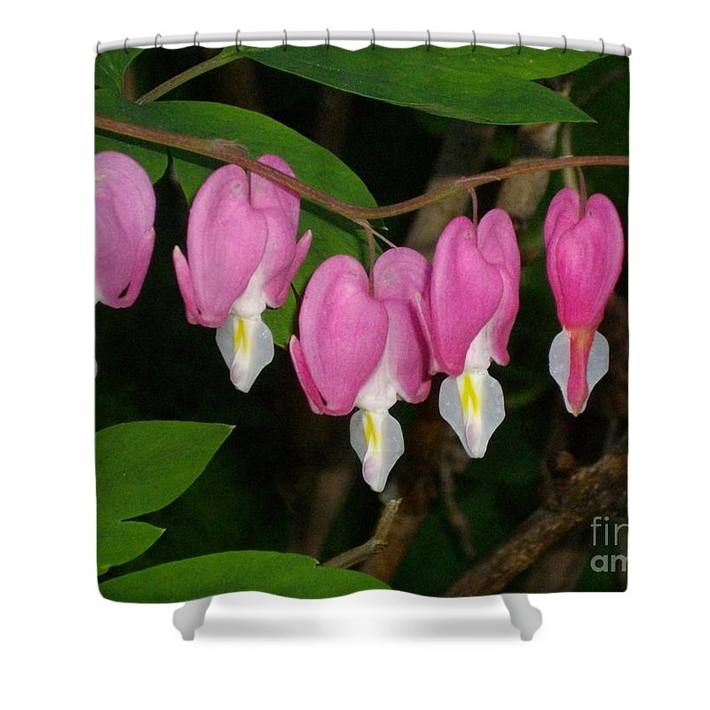 Flower Shower Curtain featuring the photograph Bleeding Hearts by H Cooper