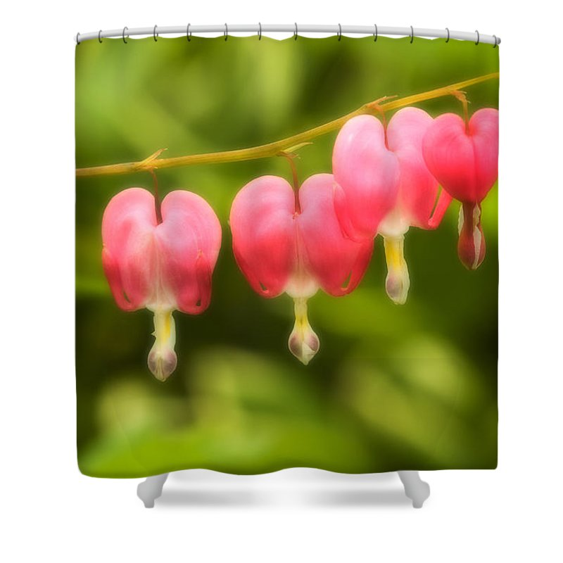 Flower Shower Curtain featuring the photograph Bleeding Hearts by Sebastian Musial