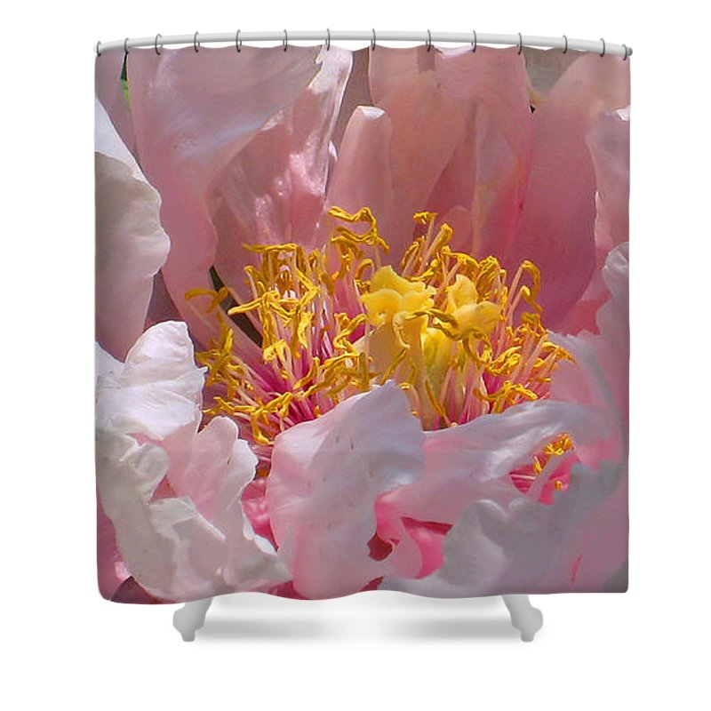 Pink Shower Curtain featuring the photograph Blessings And Blossoms by Cindy Greenstein
