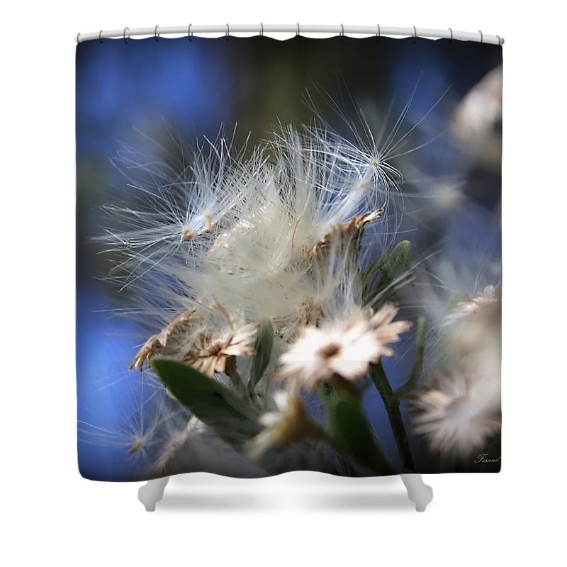 Wildlflowers Shower Curtain featuring the photograph Blooming Wildflower by Debra Forand
