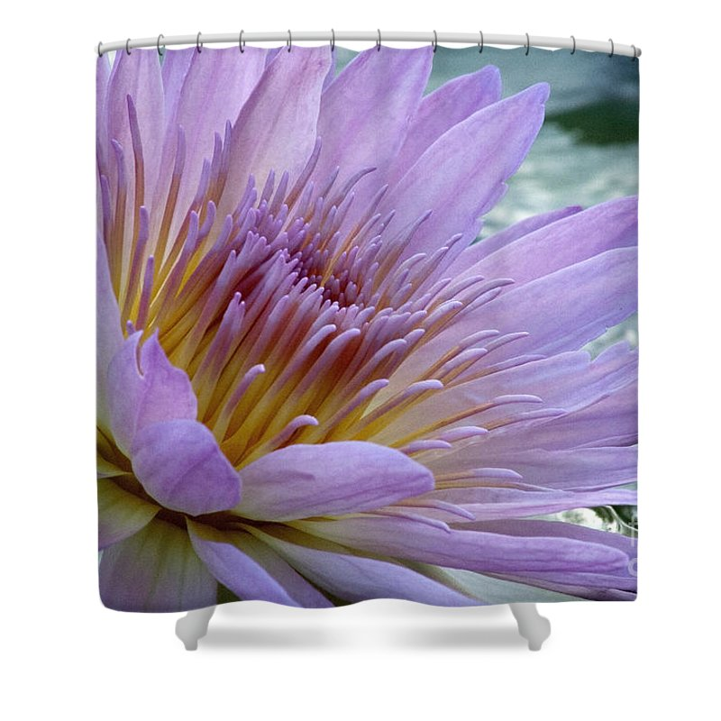 Lily Pad Shower Curtain featuring the photograph Bloom's Blush by Alycia Christine