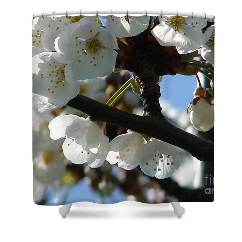 Blossoms Shower Curtain featuring the photograph Blossoms 4 by Carol Lynch