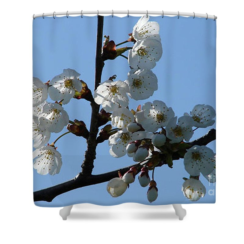 Blossoms Shower Curtain featuring the photograph Blossoms by Carol Lynch
