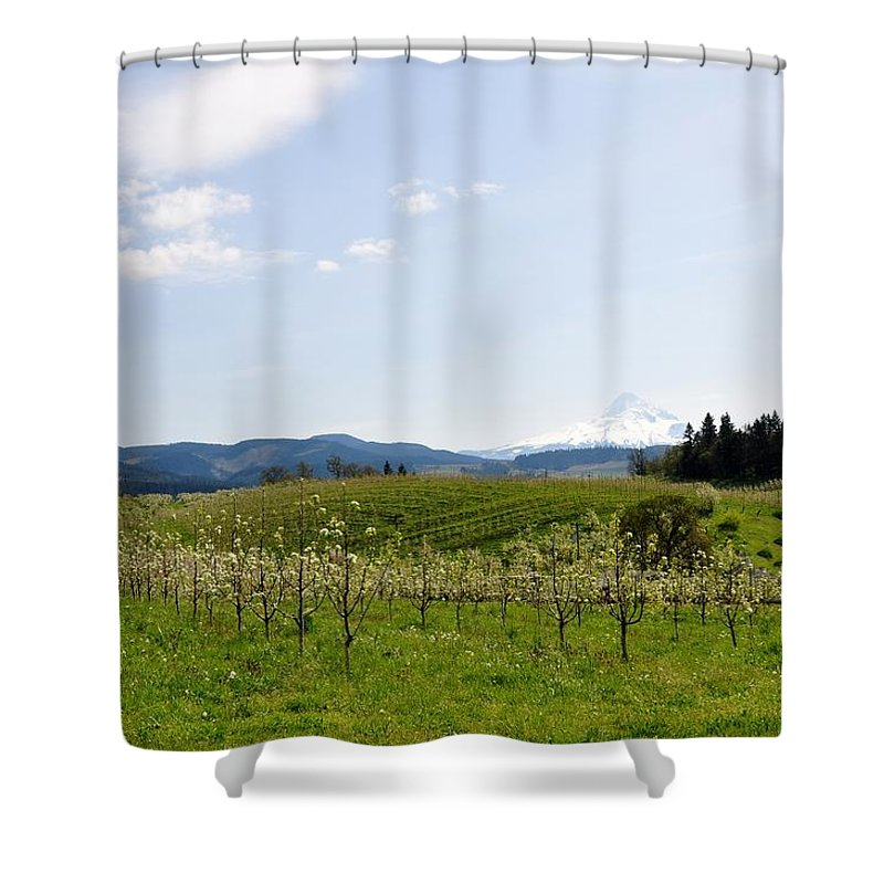 Mount Hood Shower Curtain featuring the photograph Blossoms In Spring by Image Takers Photography LLC - Laura Morgan