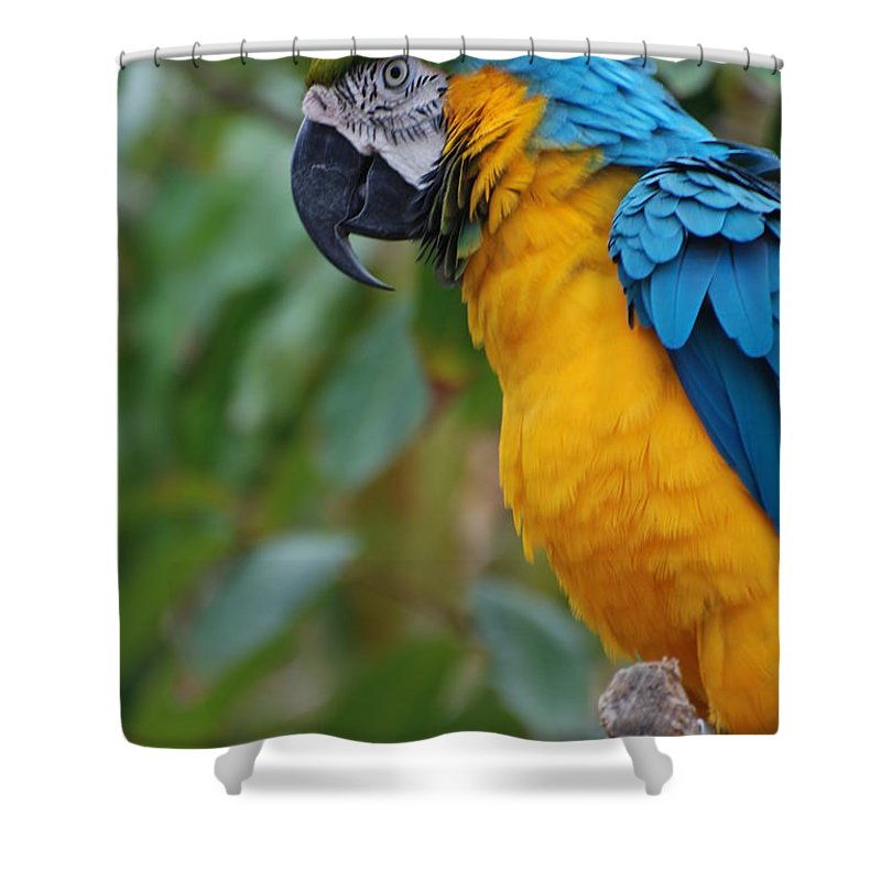 Macaw Shower Curtain featuring the photograph Blue And Gold Macaw by DejaVu Designs