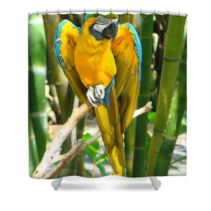 Blue And Gold Macaw Shower Curtain featuring the photograph Blue And Gold Macaw by Phyllis Beiser