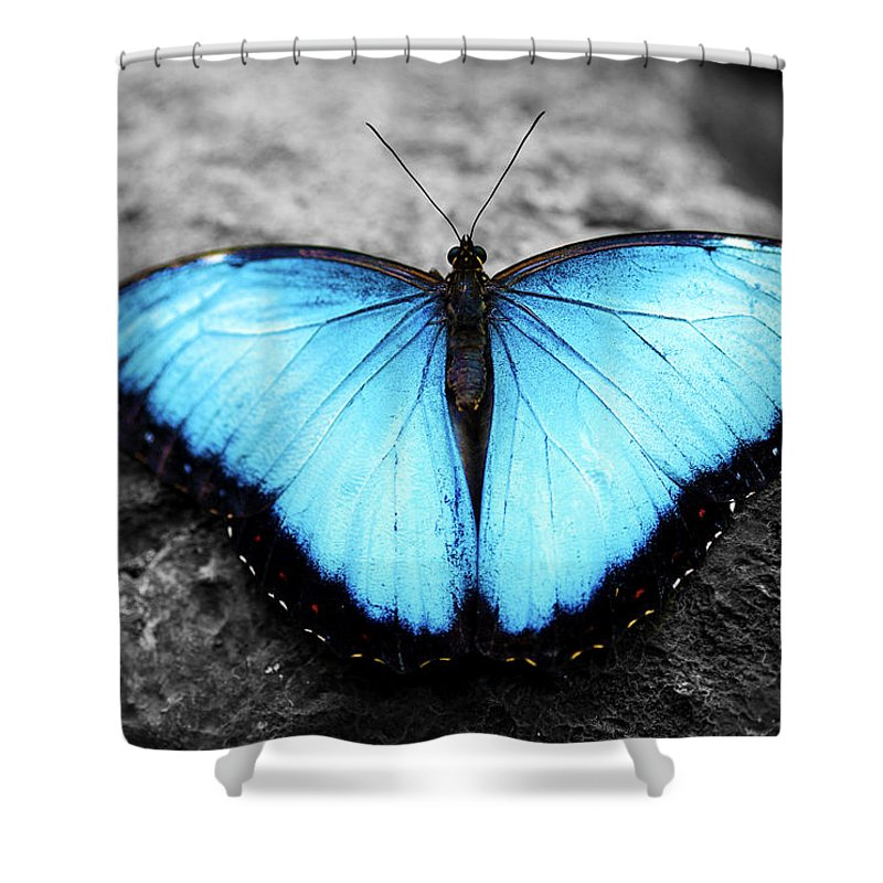 Blue Butterfly Shower Curtain Featuring The Photograph Angel 2 By Sumit Mehndiratta