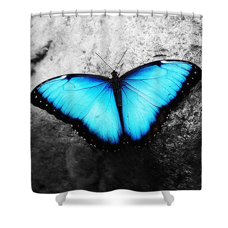 Blue Butterfly Shower Curtain Featuring The Photograph Angel By Sumit Mehndiratta