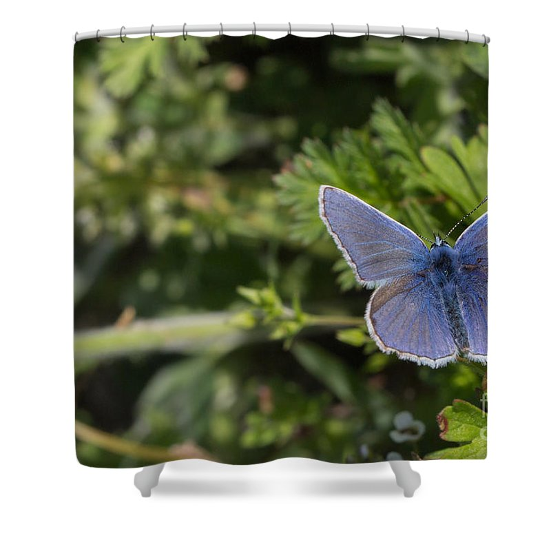 Bulgaria Shower Curtain featuring the photograph Blue Beauty by Jivko Nakev