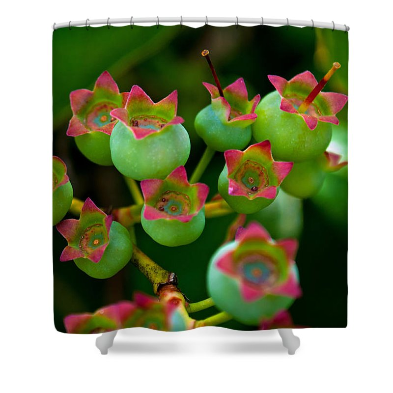 Blueberry Park Shower Curtain featuring the photograph Blue Berry Beginnings by Tikvah's Hope