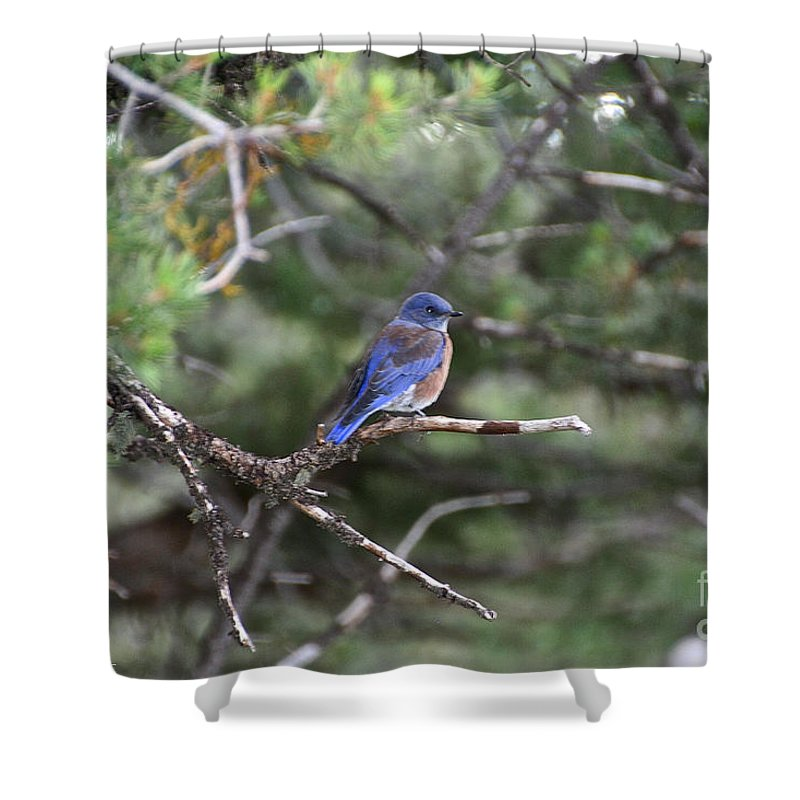 Outdoors Shower Curtain featuring the photograph Blue Bird Perched by Susan Herber