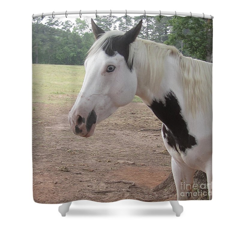 Horse Shower Curtain featuring the photograph Medicine Hat Horse by Donna Brown